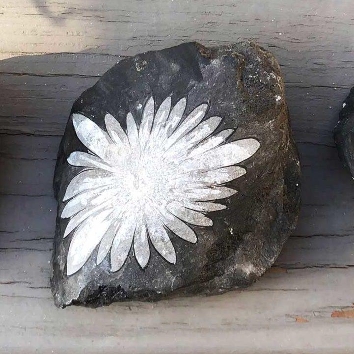 Fossilized Chrysanthemum Flower Stone